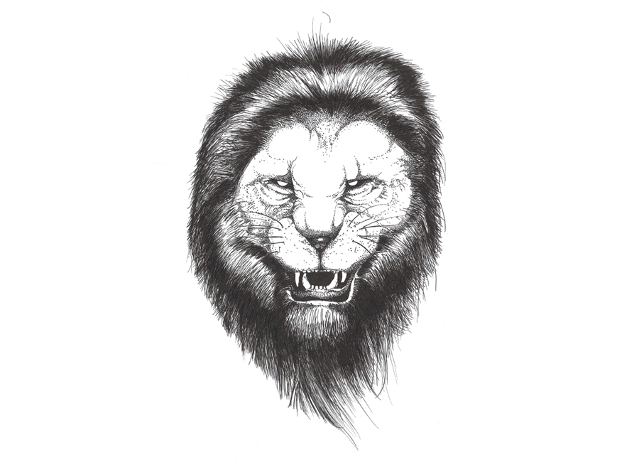 angry-lion-sketch