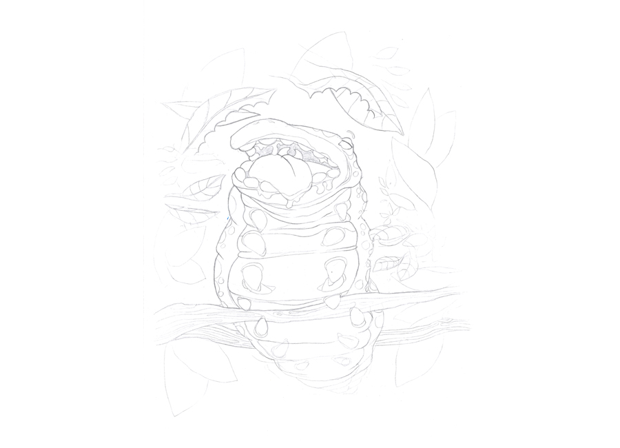 fat-larva-sketch